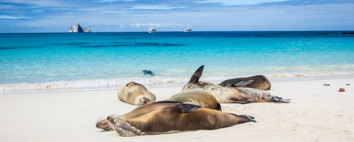 Sea lions on a Galapagos beach