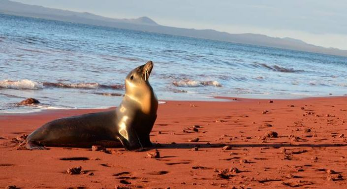 Galapagos, Galapagos Islands, vacation, cruise, giant tortoise, beach, awards, entry requirements, Ecuador, climate, weather, snorkeling