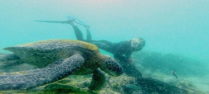 Galapagos, Galapagos Islands, news, 2017, awards, Darwin's finches, evolution, giant tortoise, extinction, breeding, Lonesome George, sharks, illegal fishing